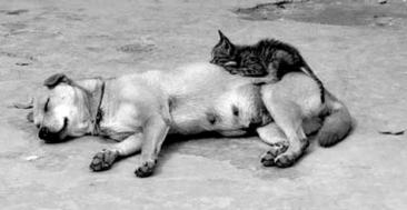 3-Year-Old Dog Nurses Stray Kitten