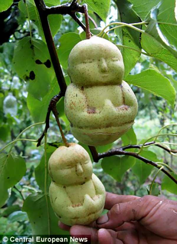 BuddhaPears1
