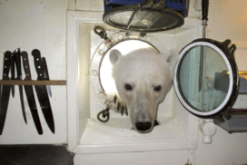 Polar Bear in the arctic wonders