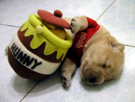 Winnie-the-Pooh Puppy