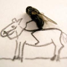 """The art of """"Flychelangelo"""""""