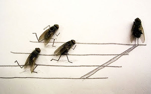 """The art of """"Flychelangelo"""" 2"""