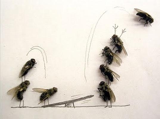 """The art of """"Flychelangelo"""" 4"""