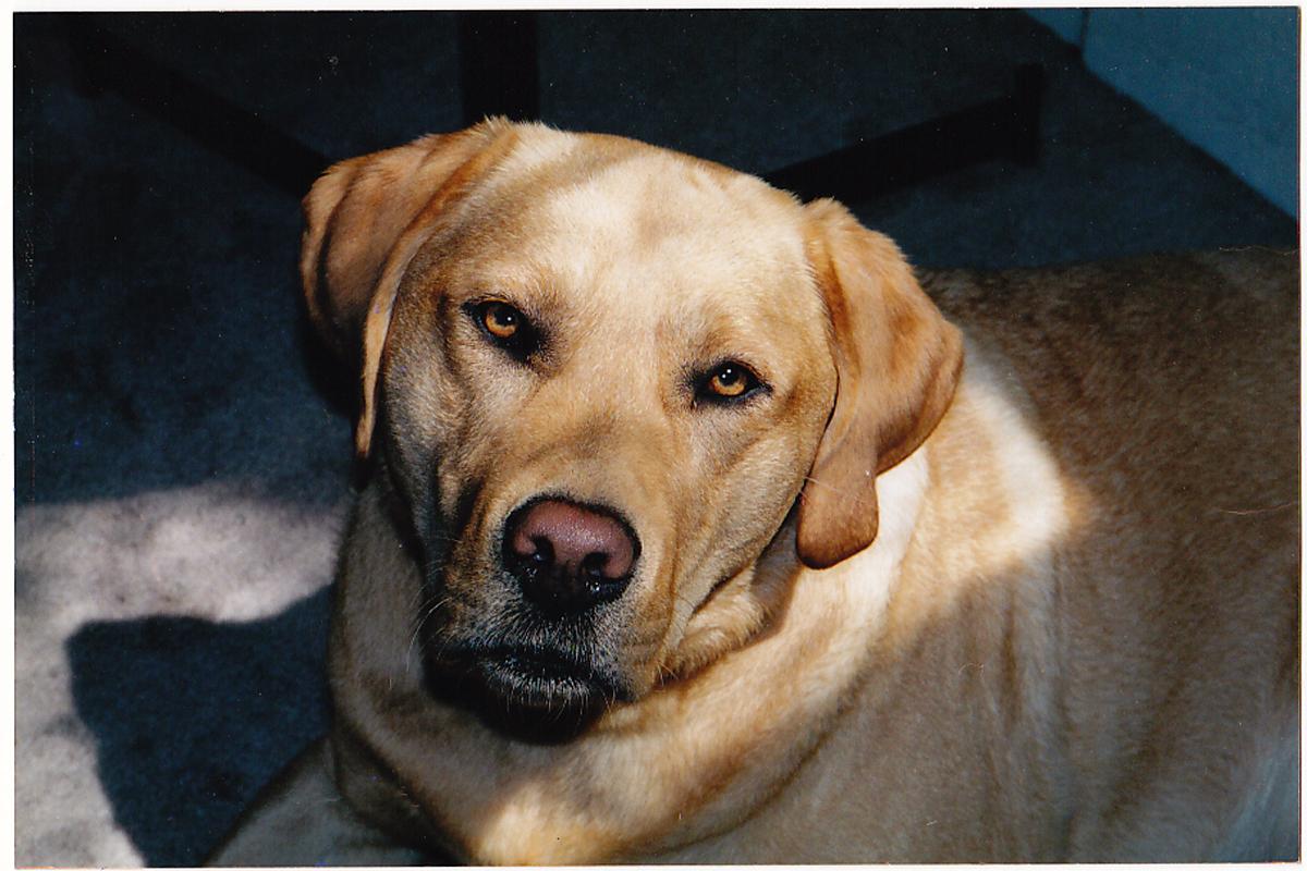 In memory of my favorite dog. Ever. Otis.