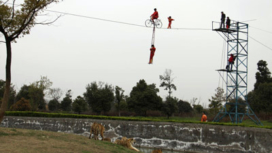 Chinese girl, 3, walks tightwire above tigers…
