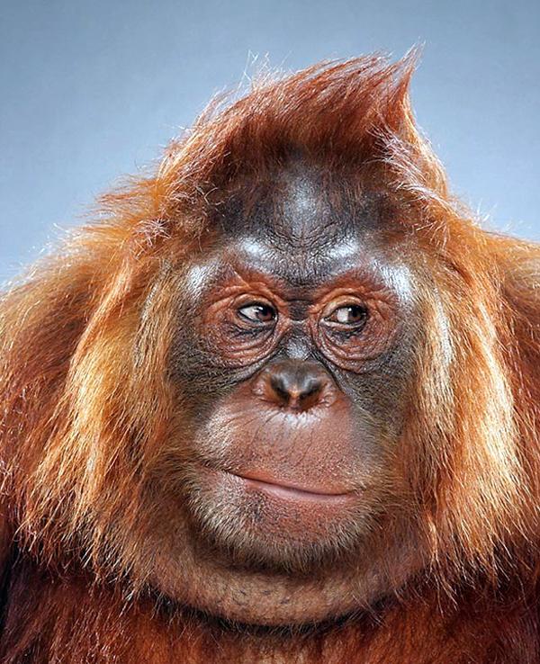 Jill Greenberg – Monkey Portraits
