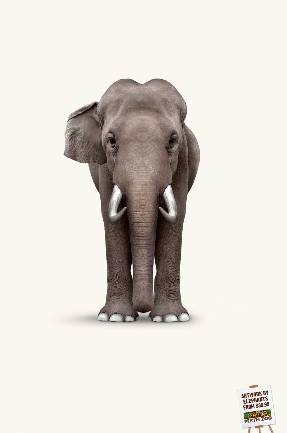 Perth Zoo — Elephant Art: Van Gogh