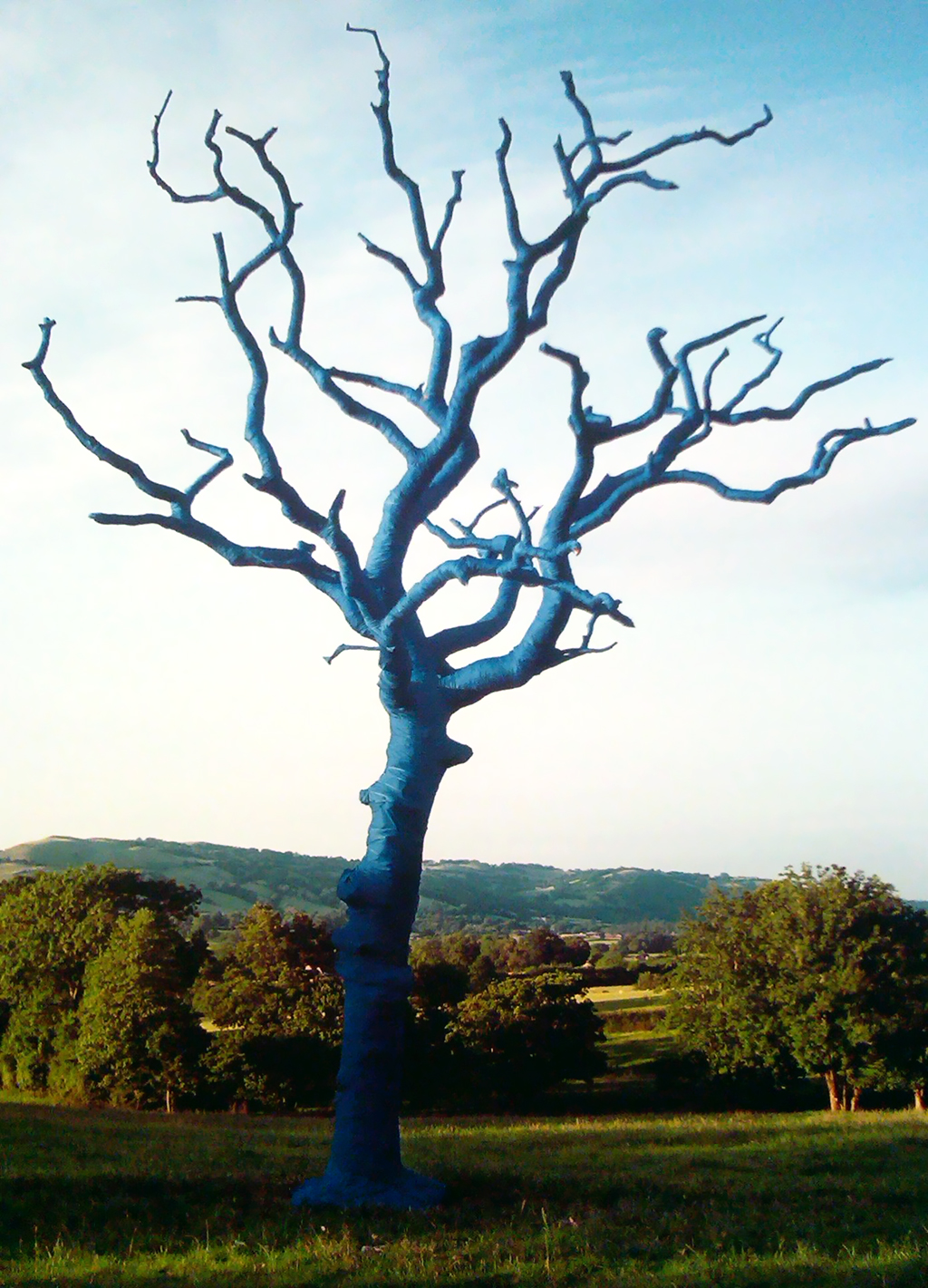 Bound – Tree Art in Wales