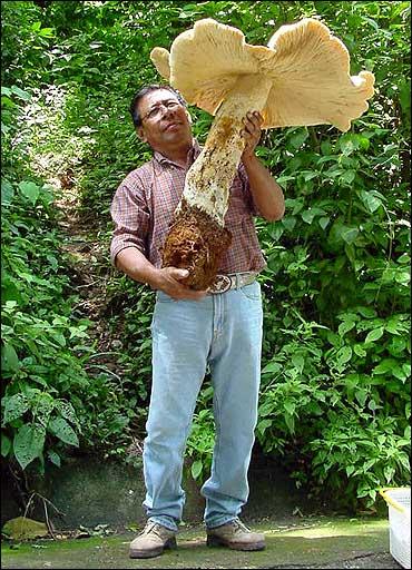 Mexican mega-mushroom a savoury stunner