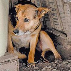 Argentine dog saves abandoned baby