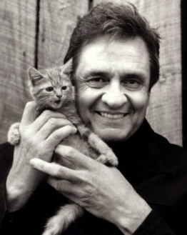Kitten And Cash