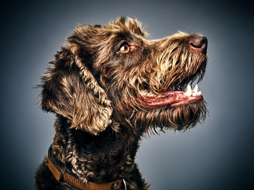 """Glamour Dogs"" by Albert Heijn 02"