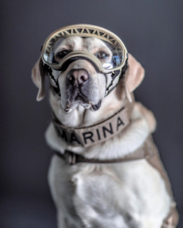 Santiago Arau ~ Search And Rescue Dogs