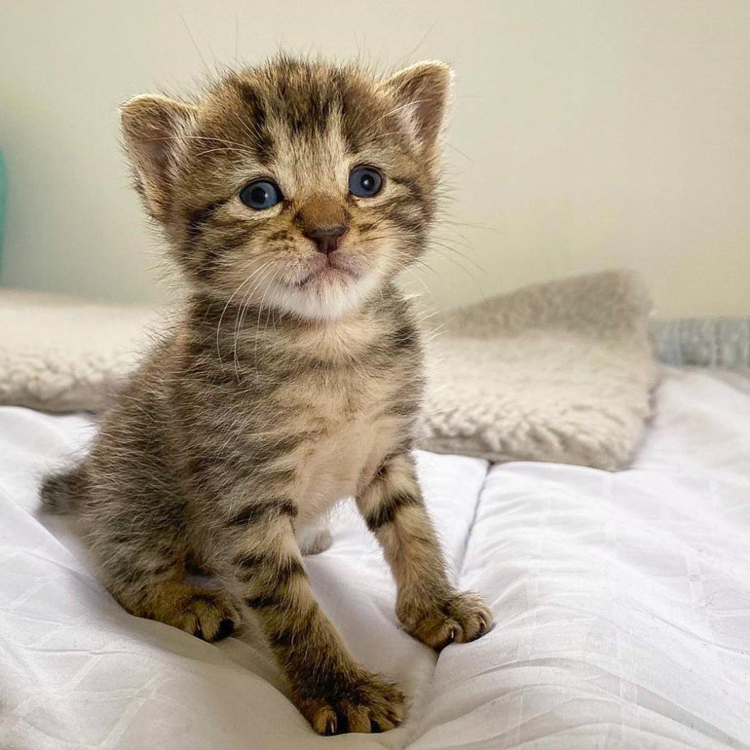 Joni's Kittens 01