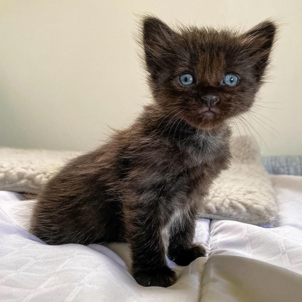 Joni's Kittens 02