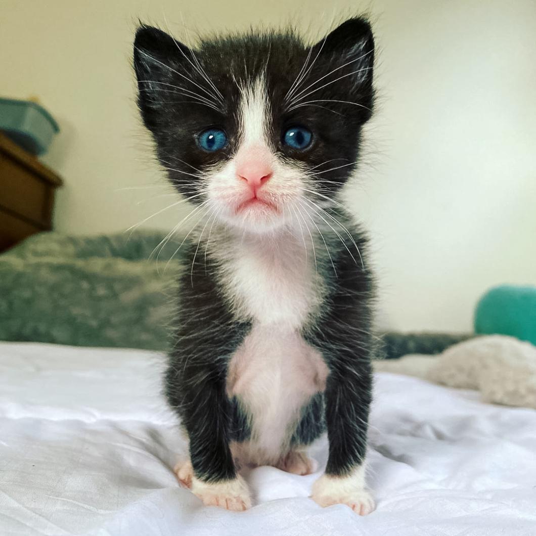 Joni's Kittens 03