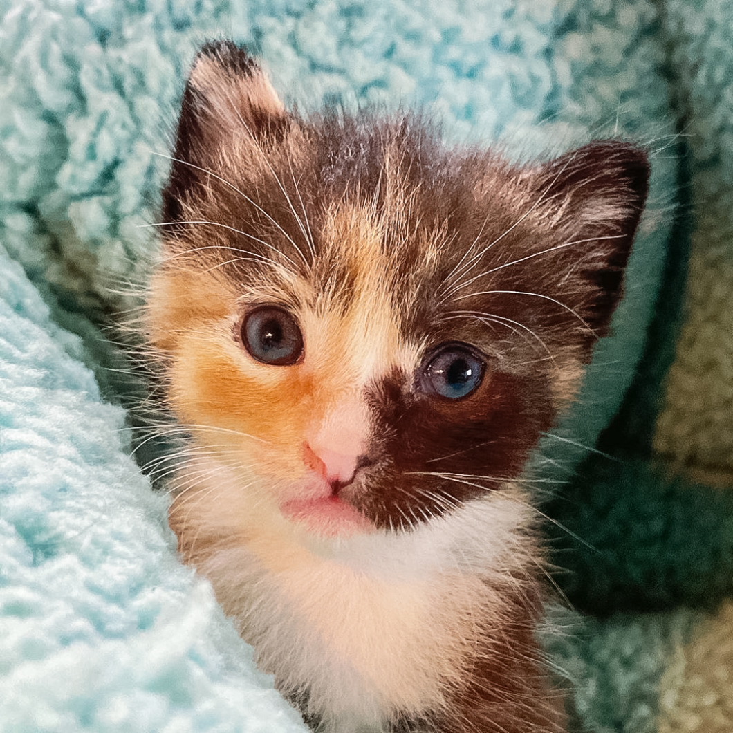 Joni's Kittens 04