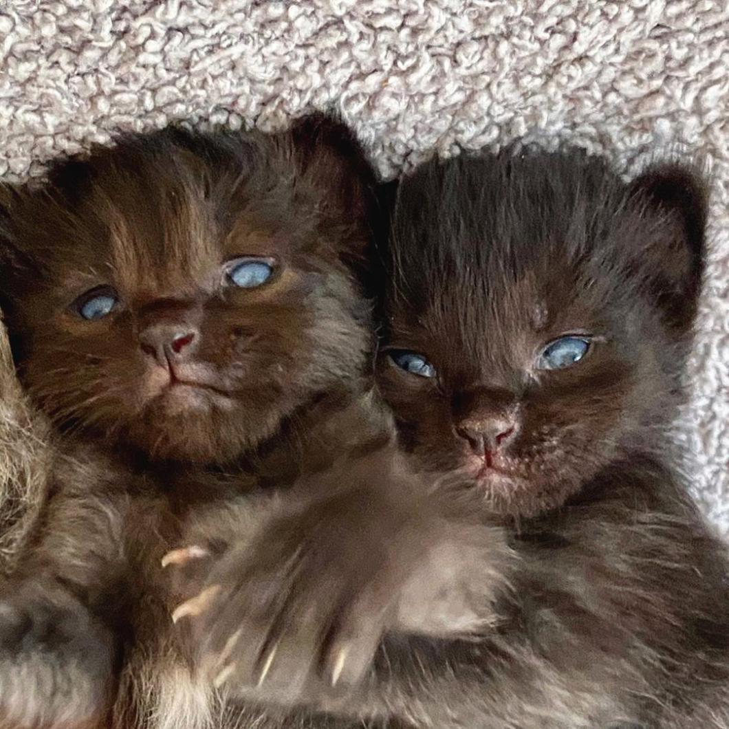 Joni's Kittens 05