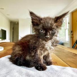 Joni's Kittens 07