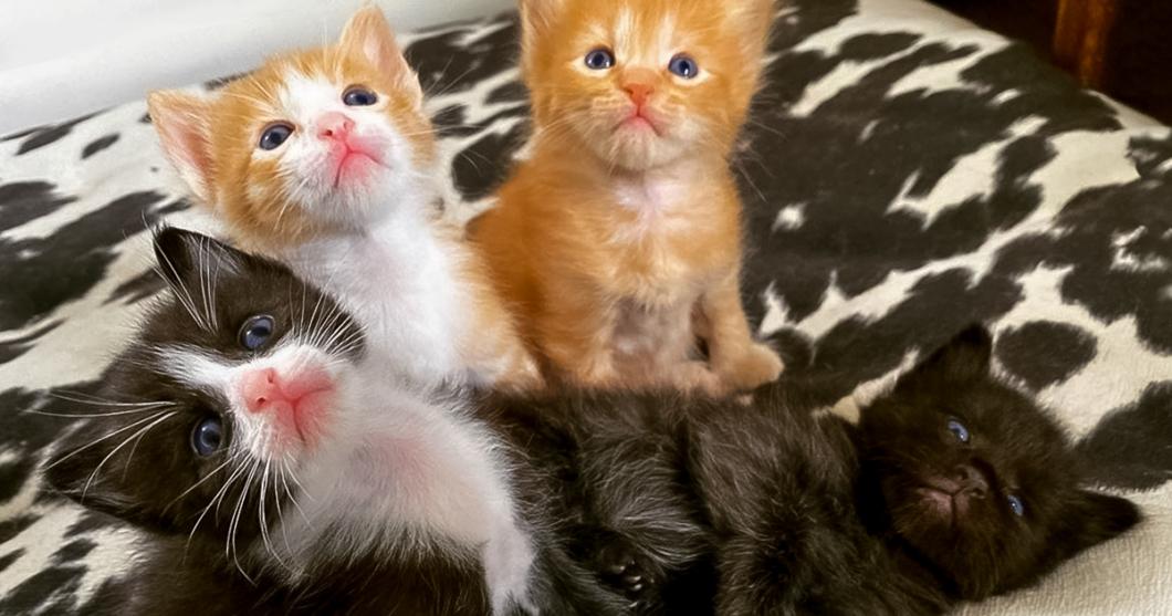 Joni's Kittens OG