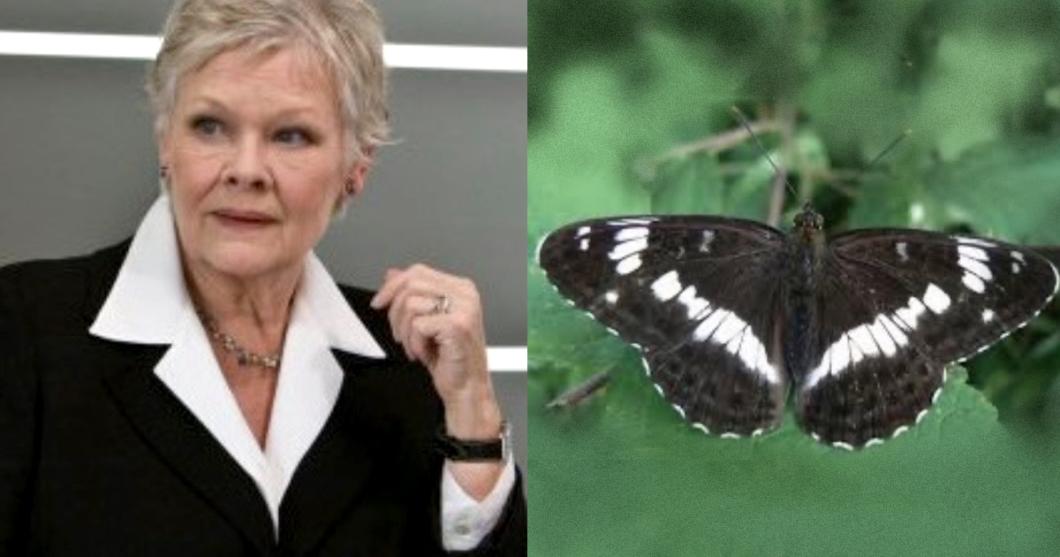Judy Dench as Butterflies