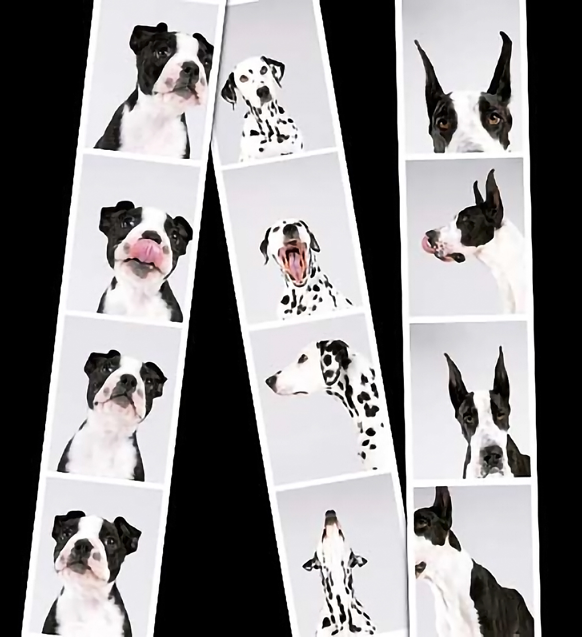 Puppies and Flowers : The Dog Photo Booth by Sharon Montrose