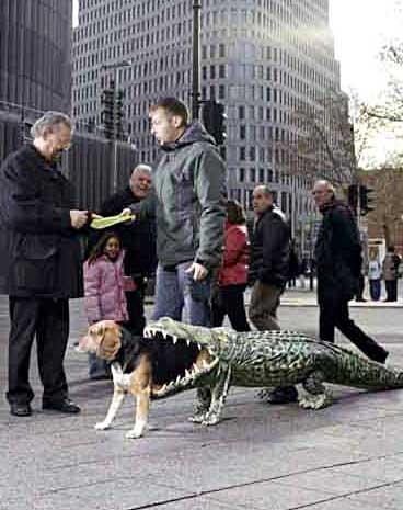 croceatdog.jpg
