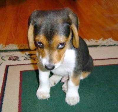 puppyWhatMe.jpg